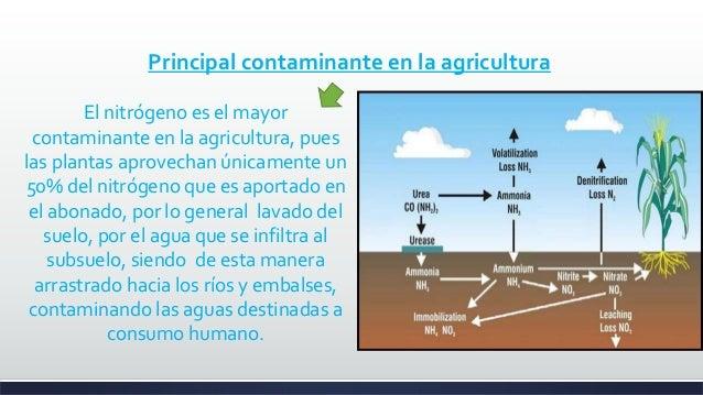 Contaminaci n por fertilizantes ppt corregido for Peces de agua fria para consumo humano