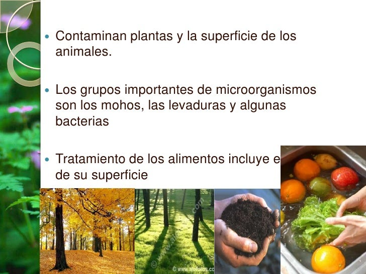 Contaminacion de los alimentos 1 - Fuentes de contaminacion de los alimentos ...