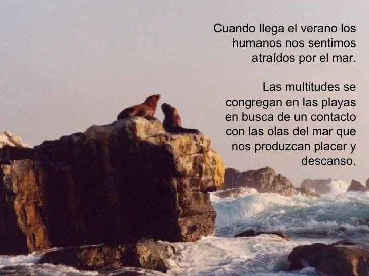 Cuando llega el verano los humanos nos sentimos atraídos por el mar. Las multitudes se congregan en las playas en busca de...