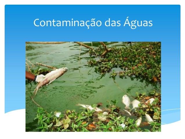 Contaminação das Águas