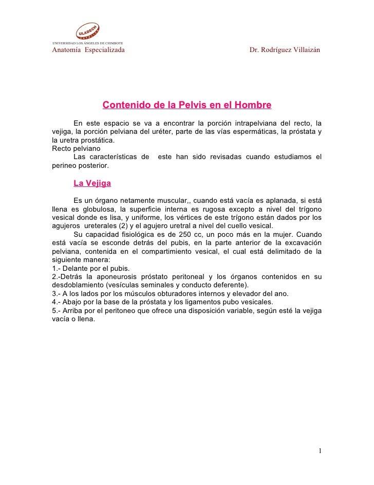 Anatomía Especializada                                        Dr. Rodríguez Villaizán                    Contenido de la P...