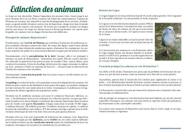 La faune est très diversifiée. Depuis l'apparition des premiers êtres vivants jusqu'à nos jours l'histoire de la vie sur T...