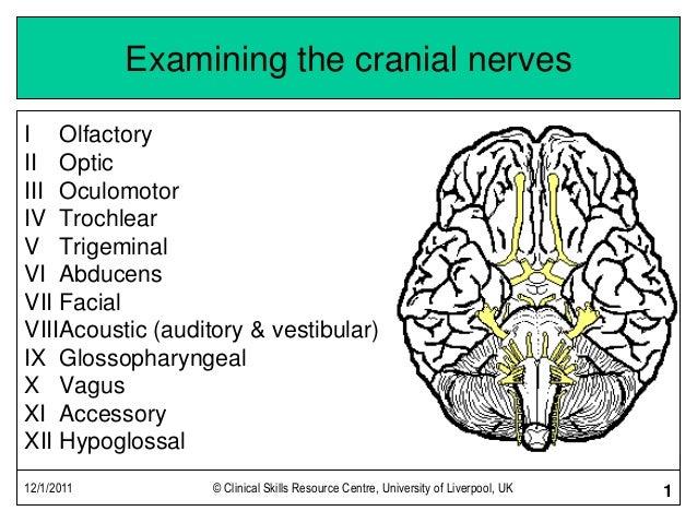 Continuation of Cranial Nerve Exam