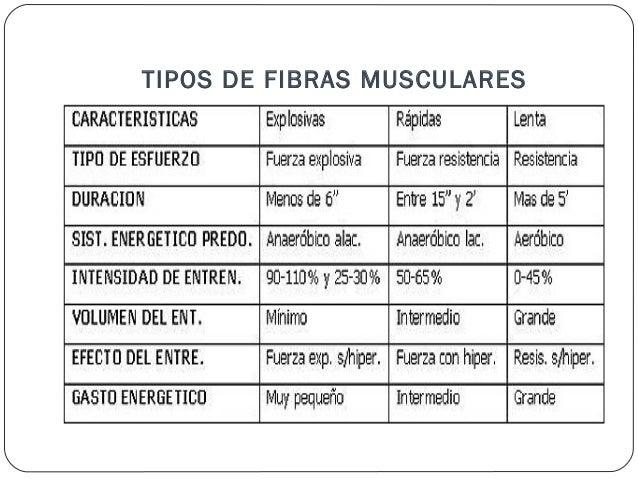 FISIOLOGIA Contraccion del musculo esqueletico