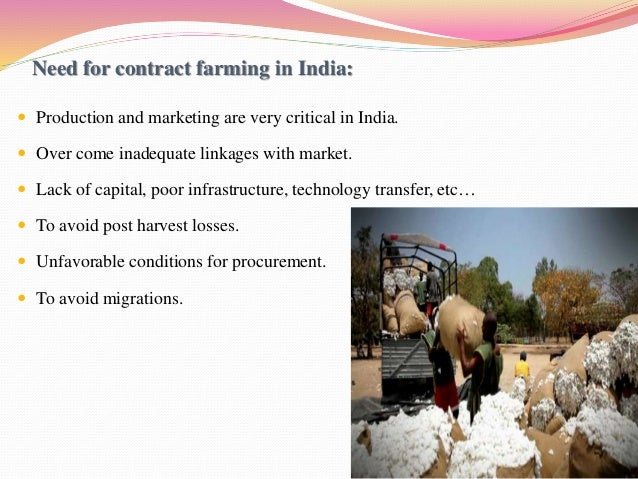 A Vexed Contract! Contract Farming and its Implications on Small Scale Farming in India
