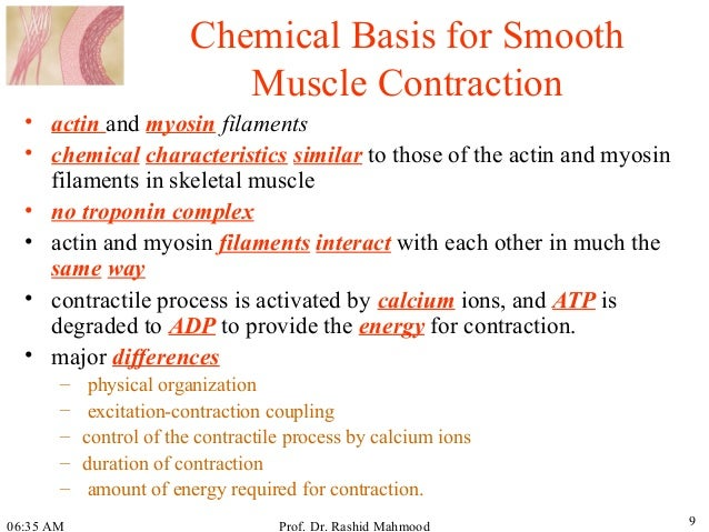 molecular and chemical basis of muscle contraction