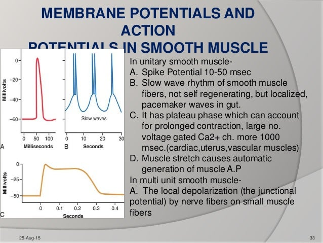 Contraction of skeletal and smooth muscles 25 aug 15 32 33 membrane potentials and action potentials in smooth muscle ccuart Image collections