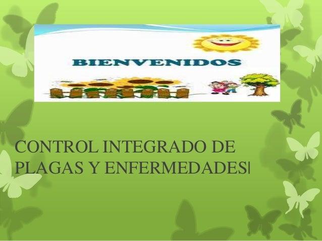 CONTROL INTEGRADO DE PLAGAS Y ENFERMEDADES|
