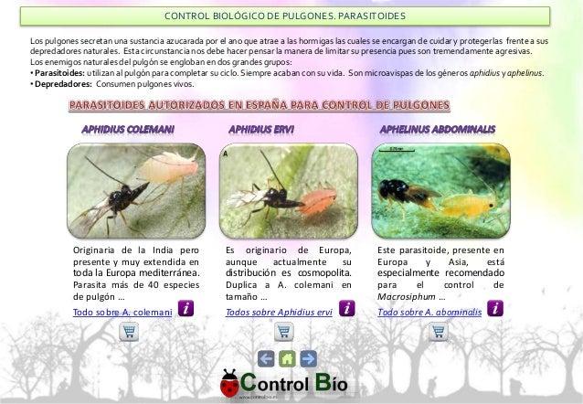 Control Biol Gico De Plagas En Jardineria