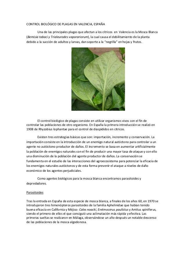 CONTROL BIOLÓGICO DE PLAGAS EN VALENCIA, ESPAÑAUna de las principales plagas que afectan a los cítricos en Valencia es la ...