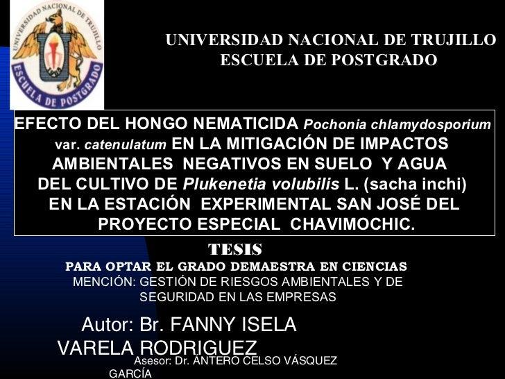 UNIVERSIDAD NACIONAL DE TRUJILLO                         ESCUELA DE POSTGRADOEFECTO DEL HONGO NEMATICIDA Pochonia chlamydo...