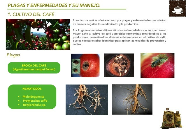 Control biologico de plagas y enfermedades cafe sena brochure - Enfermedades de las plantas de interior ...