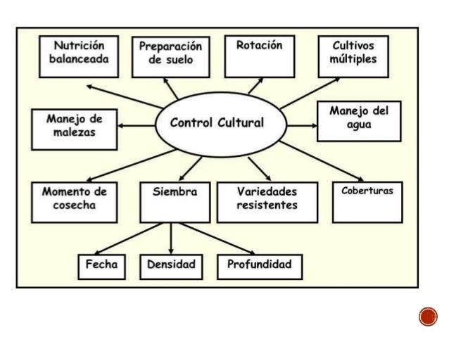 Resultado de imagen para CONTROL CULTURAL