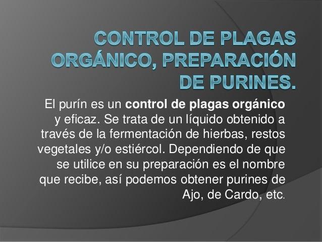 El purín es un control de plagas orgánico y eficaz. Se trata de un líquido obtenido a través de la fermentación de hierbas...