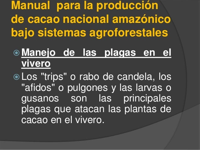 Manual para la producción de cacao nacional amazónico bajo sistemas agroforestales  Manejo de las plagas en el vivero  L...
