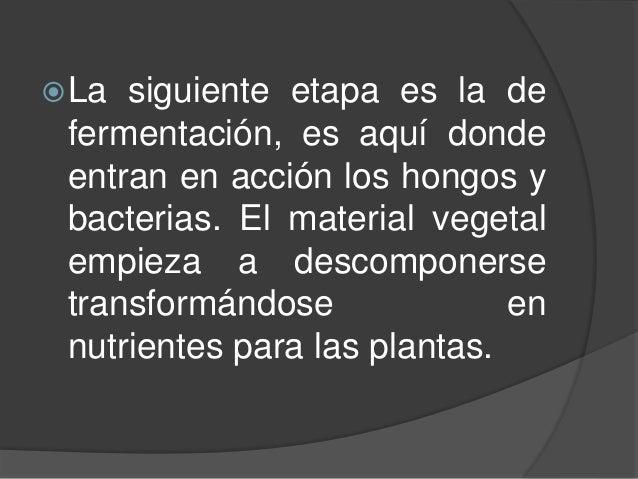La siguiente etapa es la de fermentación, es aquí donde entran en acción los hongos y bacterias. El material vegetal empi...