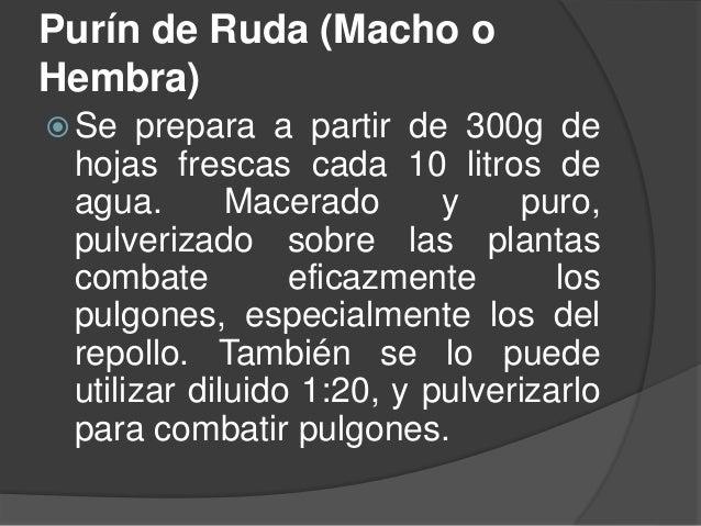 Purín de Ruda (Macho o Hembra)  Se prepara a partir de 300g de hojas frescas cada 10 litros de agua. Macerado y puro, pul...