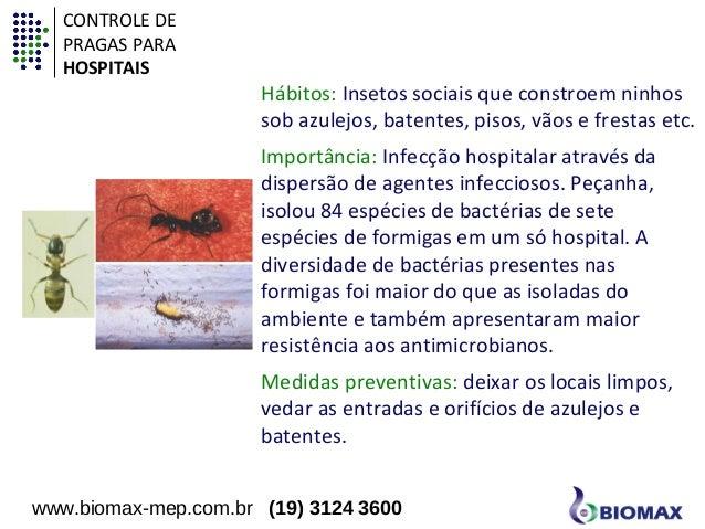 Hábitos: Insetos sociais que constroem ninhos  sob azulejos, batentes, pisos, vãos e frestas etc.  Importância: Infecção h...