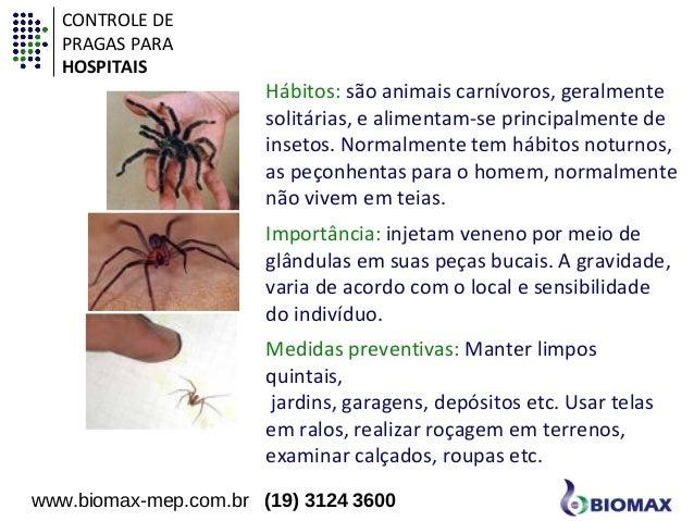 Hábitos: são animais carnívoros, geralmente  solitárias, e alimentam-se principalmente de  insetos. Normalmente tem hábito...