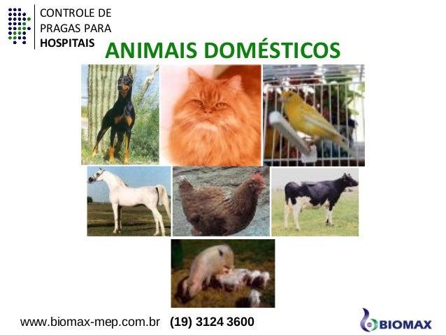 CONTROLE DE  PRAGAS PARA  HOSPITAIS  ANIMAIS DOMÉSTICOS  www.biomax-mep.com.br (19) 3124 3600