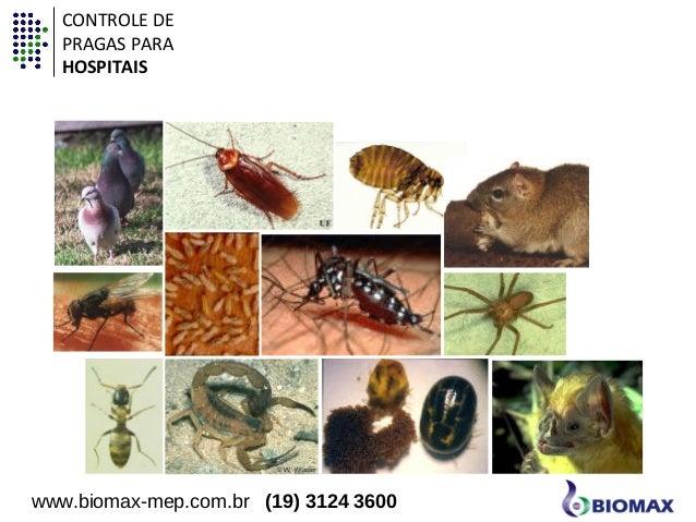 Animais sinantrópicos  CONTROLE DE  PRAGAS PARA  HOSPITAIS  www.biomax-mep.com.br (19) 3124 3600