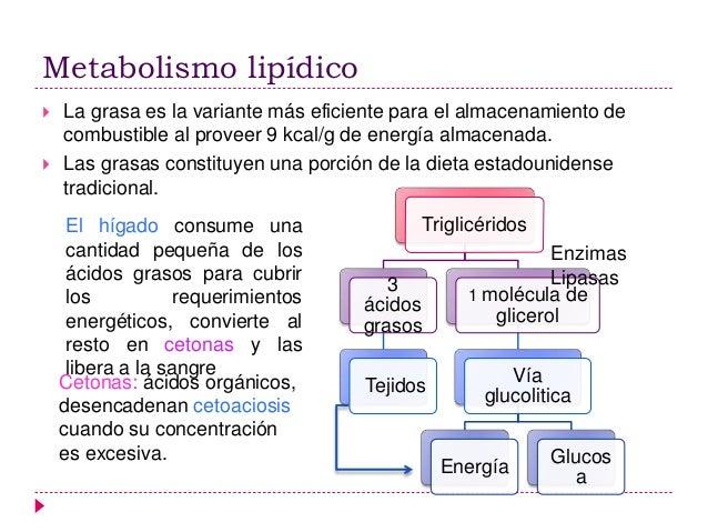 Control hormonal del metabolismo de glucosa, grasas y