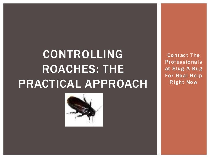 Contact The Professionals at Slug-A-Bug For Real Help Right Now<br />Controlling Roaches: The Practical Approach<br />