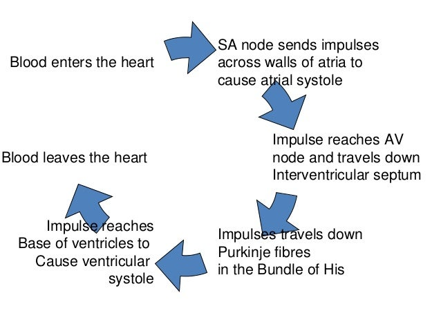 Control Of Cardiac Cycle