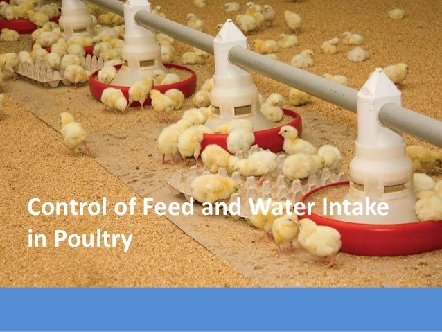 Control of Feed and Water Intake in Poultry