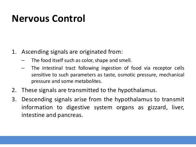 Nervous Control 1. Ascending signals are originated from: – The food itself such as color, shape and smell. – The intestin...