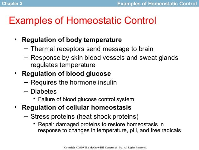 Homeostatic Control of Blood Glucose Levels Essay