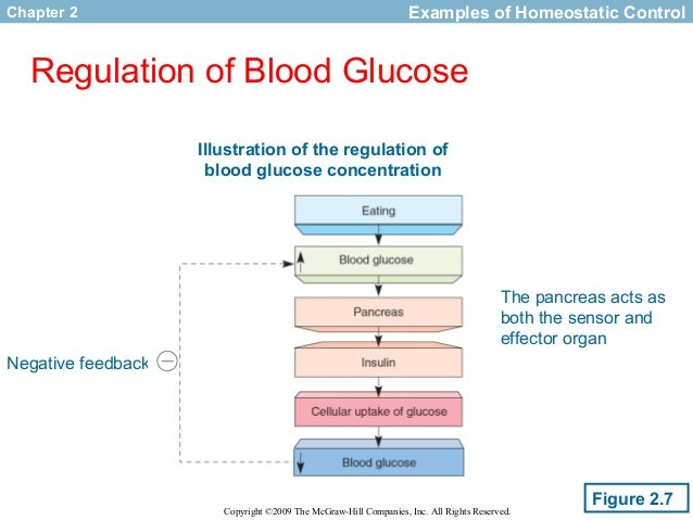 homeostatic control of glucose essay help