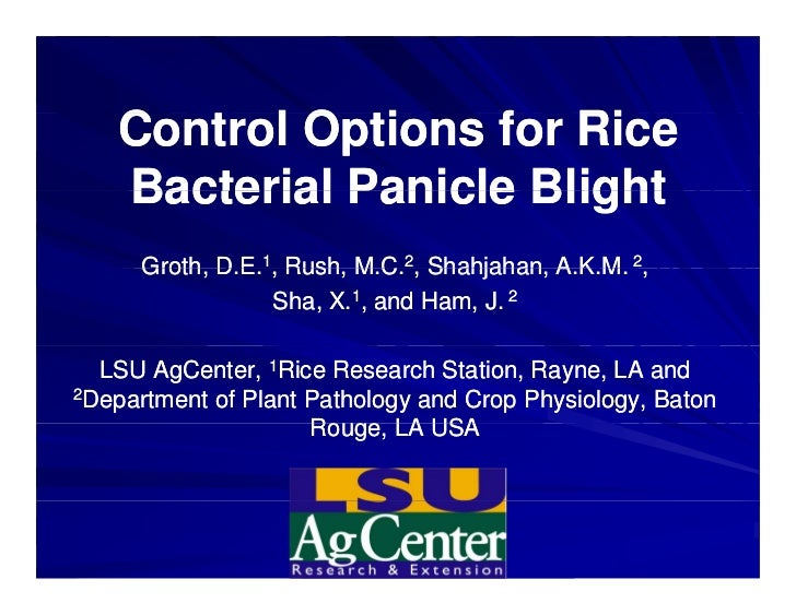 Control Options for Rice   C t l O ti      f Ri   Bacterial Panicle Blight      Groth D E 1, Rush M C 2, Shahjahan A K M 2...