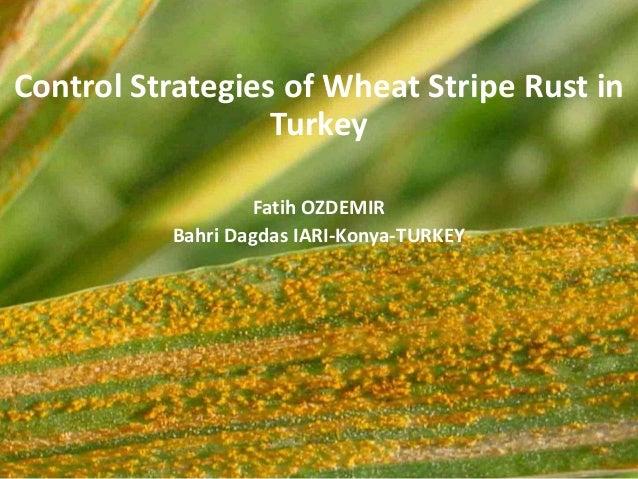 Control Strategies of Wheat Stripe Rust in Turkey Fatih OZDEMIR Bahri Dagdas IARI-Konya-TURKEY