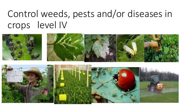Diseases and insect pest management