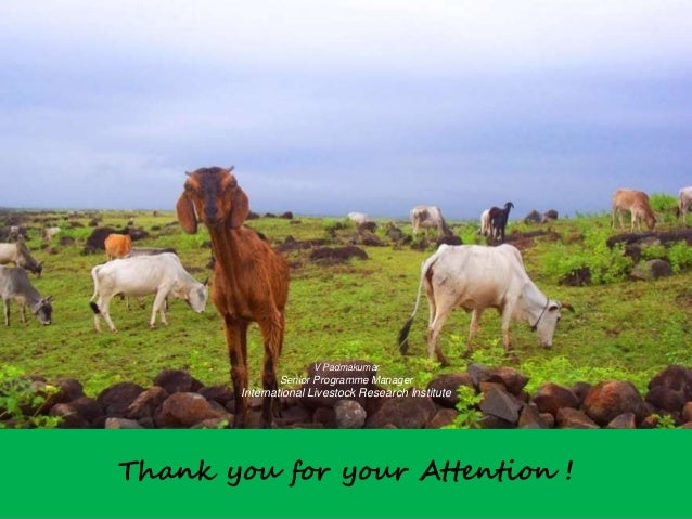 Thank you for your Attention ! V Padmakumar Senior Programme Manager International Livestock Research Institute