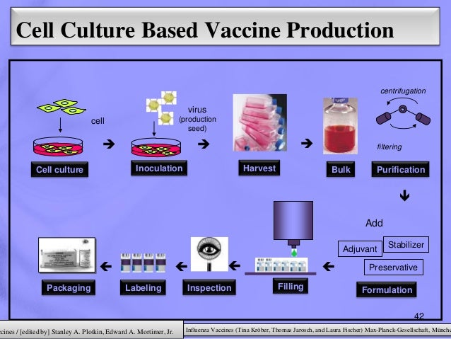 cell culture for producing influenza vaccines Quadrivalent cell-culture–based seasonal influenza vaccines are likely  for this vaccine from cell culture,  vaccine development and production:.