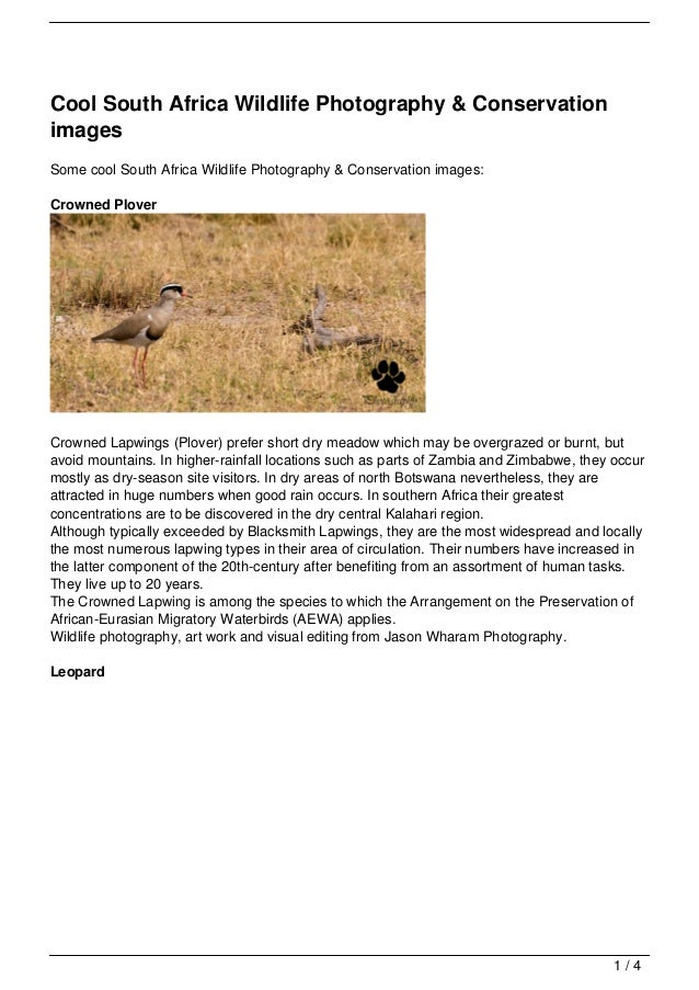 Cool South Africa Wildlife Photography & ConservationimagesSome cool South Africa Wildlife Photography & Conservation imag...