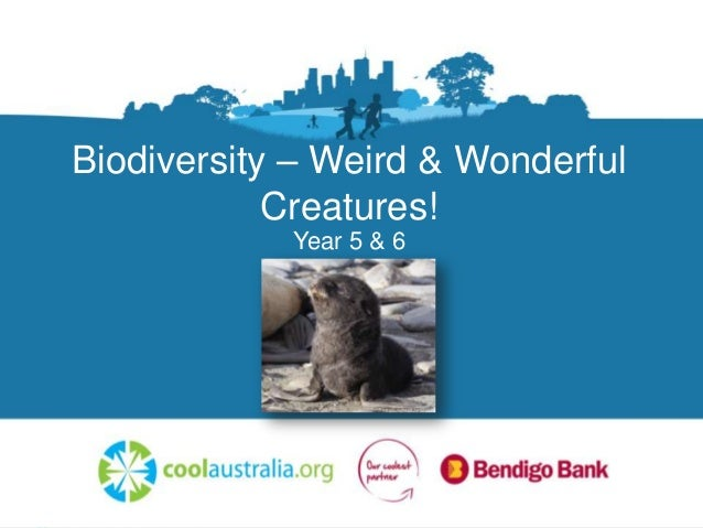 Biodiversity – Weird & Wonderful Creatures! Year 5 & 6