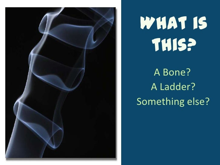 What is this?<br />A Bone?<br />A Ladder?<br />Something else?<br />