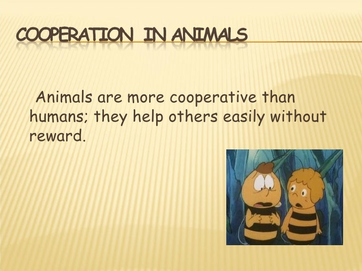 Animals are more cooperative thanhumans; they help others easily withoutreward.