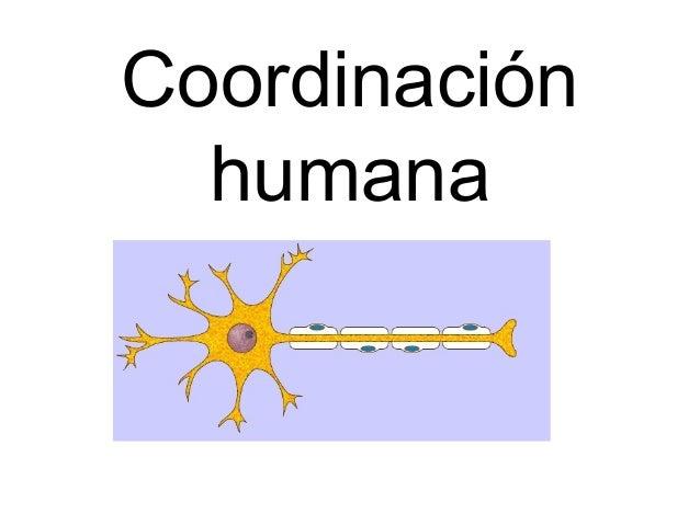 Coordinación humana