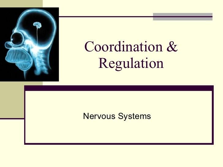 Coordination & Regulation Nervous Systems