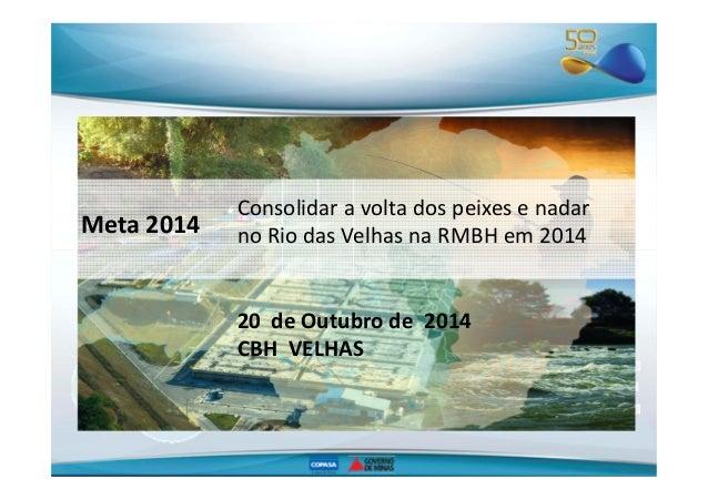 Meta 2014  Consolidar a volta dos peixes e nadar  no Rio das Velhas na RMBH em 2014  20 de Outubro de 2014  CBH VELHAS