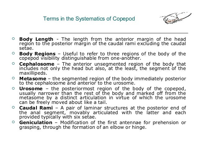 Terms in the Systematics of Copepod  Body Length - The length from the anterior margin of the head region to the posterio...