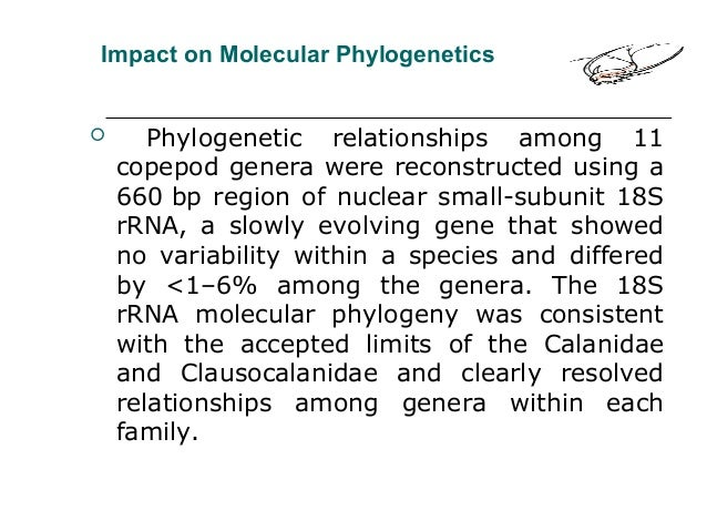 Impact on Molecular Phylogenetics  Phylogenetic relationships among 11 copepod genera were reconstructed using a 660 bp r...