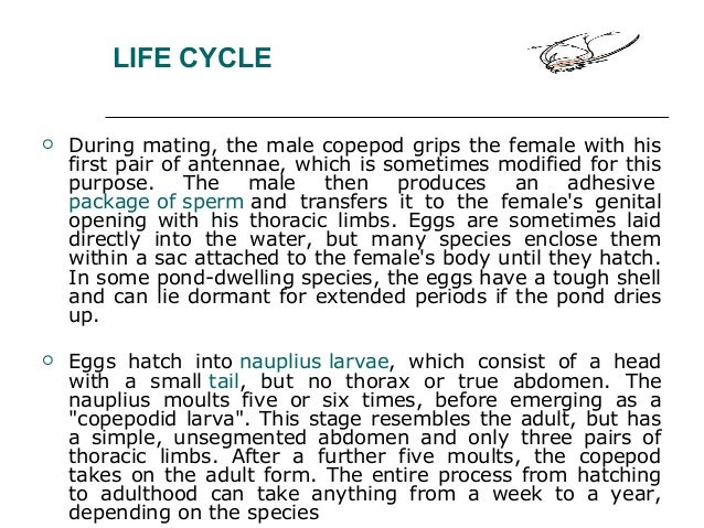 LIFE CYCLE  During mating, the male copepod grips the female with his first pair of antennae, which is sometimes modified...
