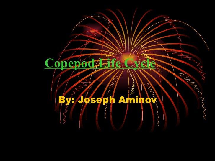 Copepod Life Cycle By: Joseph Aminov