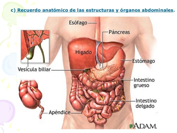 Radiografía de Abdomen