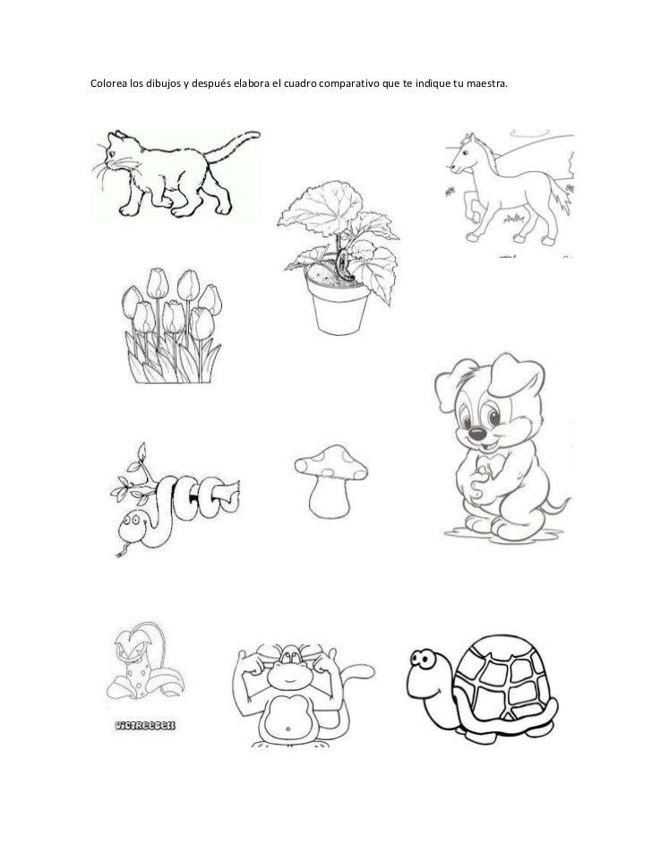 Copia de animales y plantas